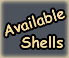 Available Seashells