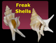 Freak Shells